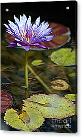 Lavender Lily Acrylic Print