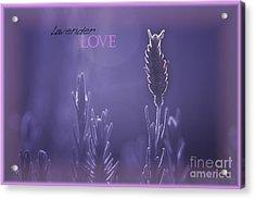 Acrylic Print featuring the photograph Lavender Love by Vicki Ferrari