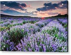 Lavender Sea Acrylic Print by Evgeni Dinev