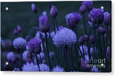 Lavender Twilight Acrylic Print by Iman Trek