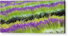 Acrylic Print featuring the photograph Lavender2 by Ryan Weddle