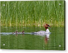 Acrylic Print featuring the photograph Lazy Swim by Brent L Ander
