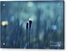 Le Centre De L Attention - Blue S0203d Acrylic Print by Variance Collections