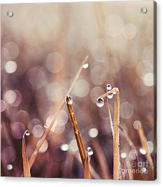Le Reveil - S04d2 Acrylic Print by Variance Collections
