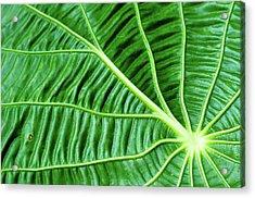 Leaf Acrylic Print by by Jonathan Fife