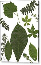 Leaf Collage II Acrylic Print by Mary Ann Southern