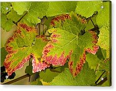 Leaf Design Acrylic Print by Jean Noren