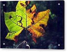 Leaf In Light Acrylic Print