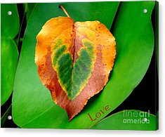 Leaf Leaf Heart Love Acrylic Print by Renee Trenholm