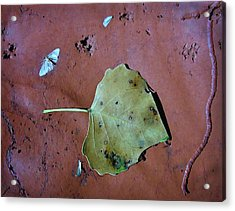 Acrylic Print featuring the photograph Leaf Libretto by Britt Runyon