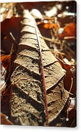 Leaf Litter Acrylic Print by Michael Standen Smith