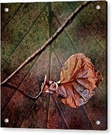 Leaf On Leaf Acrylic Print by Odd Jeppesen