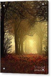 Leaf Path Acrylic Print by Robert Foster