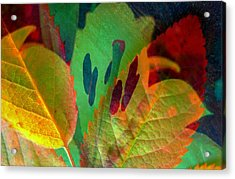 Leaf Reflections Acrylic Print by Shirley Sirois