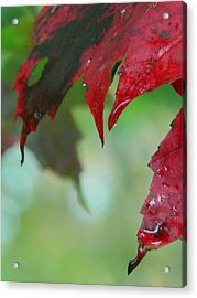 Leaf Shadows Acrylic Print by Mandi Howard
