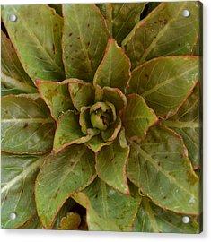 Leaf Star Acrylic Print