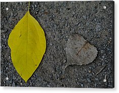 Leaf Yellow And Grey Acrylic Print