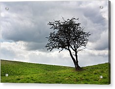 Leafless  Acrylic Print by Semmick Photo