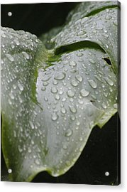 Acrylic Print featuring the photograph Leafy Greens by Tiffany Erdman