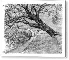 Leaning Tree Acrylic Print by Adam Long
