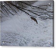 Leap Of Faith Acrylic Print by Paul Hurtubise