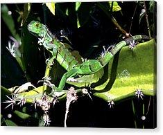 Leapin Lizards Acrylic Print by Karen Wiles
