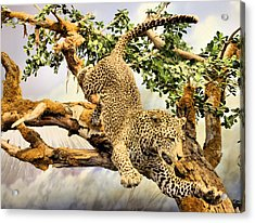 Leaping Leopard Acrylic Print by Kristin Elmquist