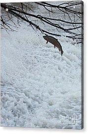 Leaping Steelhead Acrylic Print by Paul Hurtubise