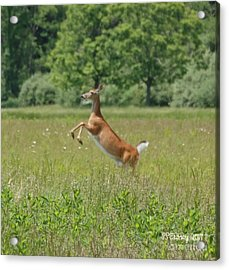 Leaping White-tail Deer Acrylic Print
