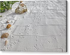 Leave Nothing But Your Footprints Acrylic Print