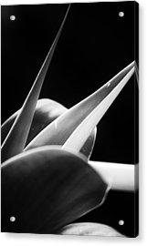 Leaves - Mono Acrylic Print by Dickon Thompson