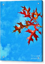 Leaves Against The Sky Acrylic Print by Judi Bagwell