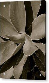 Leaves II - Mono Acrylic Print by Dickon Thompson