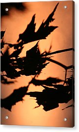 Leaves In Sunset Acrylic Print by Carolyn Reinhart