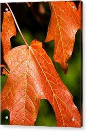 Leaves Of Orange Acrylic Print by Beth Akerman