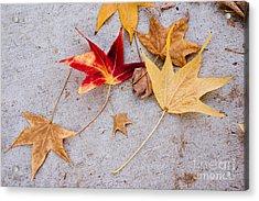 Leaves On The Sidewalk Acrylic Print