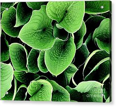 Acrylic Print featuring the photograph Leaves by Ranjini Kandasamy