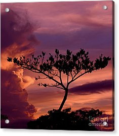 Leeward Oahu Acrylic Print