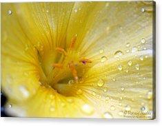 Lemon Dew Acrylic Print