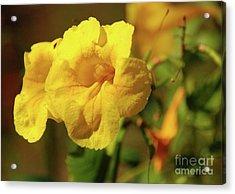 Lemony Yellow Acrylic Print