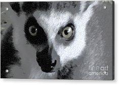 Lemur Acrylic Print by John From CNY