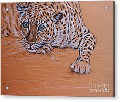 Acrylic Print featuring the pastel Leopard 1 by Amanda Dinan