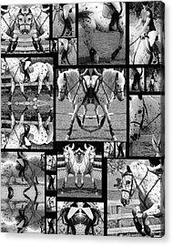 Leopard Appaloosa Collage Acrylic Print by Betsy Knapp