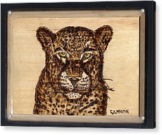 Leopard Acrylic Print by Clarence Butch Martin