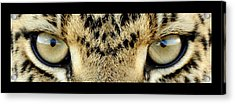 Leopard Eyes Acrylic Print by Sumit Mehndiratta