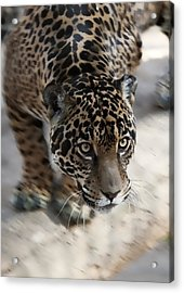Leopard  Acrylic Print