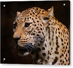 Leopard IIi Acrylic Print by Jai Johnson