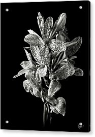Leopard Lily In Black And White Acrylic Print