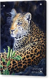 Leopard  Sold  Prints Available Acrylic Print