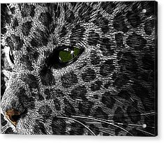 Leopard Within Acrylic Print